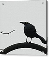 Stick-grackle And Bar Thats All Acrylic Print