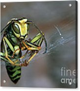 Sticky Situation Acrylic Print