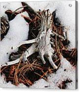 Still In Snow Acrylic Print