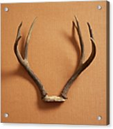Still Life Of Deer Antlers On A Fabric Acrylic Print