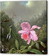 Still Life With An Orchid And A Pair Of Hummingbirds Acrylic Print