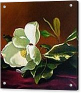 Still Life With White Flower Acrylic Print