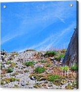 Still Standing. Near Mount St. Helens 2012 Acrylic Print