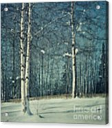 Still Winter Acrylic Print