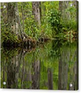 Stillness Swamp Acrylic Print