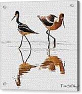Stilt And Avocet Share The Pond Acrylic Print