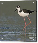Stilt In Duckweed Acrylic Print