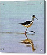 Stilt Out For A Stroll Acrylic Print