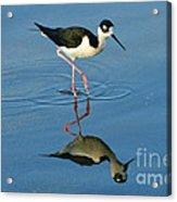 Stilt Reflection Acrylic Print