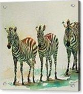 Stipes II Acrylic Print