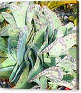 Stippled Cactus Acrylic Print