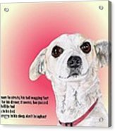 Stitch - A Shelter Sweetie Acrylic Print