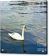 Stockholm City Harbor Swan Acrylic Print