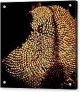 Stolen Seeds Acrylic Print