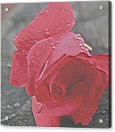 Stone Cold Rose Acrylic Print