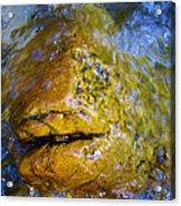 Stone Fish Acrylic Print