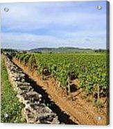 Stone Wall. Vineyard. Cote De Beaune. Burgundy. France. Europe Acrylic Print