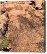 Stoned Leap Frog Acrylic Print