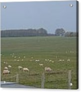 Stonehenge Sheep Acrylic Print