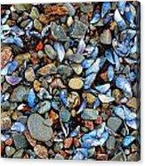 Stones And Seashells Acrylic Print
