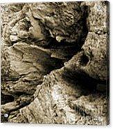 Stonewood Canyon - Square - Sepia Tone - Wonderwood Collection - Olympic Peninsula Wa  Acrylic Print