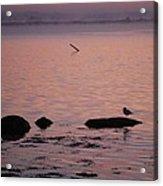 Stonington Sunrise Acrylic Print
