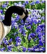 Stop And Smell The Flowers Acrylic Print