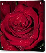 Stop To Smell The Roses Acrylic Print