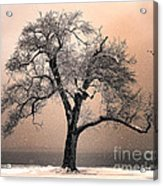 Stories To Tell Acrylic Print by Betty LaRue