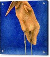 Stork Naked... Acrylic Print