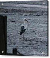 Stork On A Frosty Morning Acrylic Print