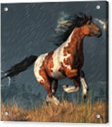 Storm Mustang Acrylic Print