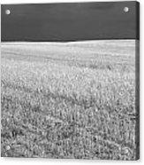 Storm On The Stubble Acrylic Print by Gordon  Grimwade