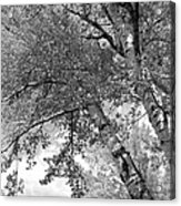 Storm Over The Cottonwood Trees - Black And White Acrylic Print