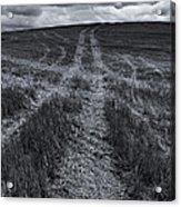 Storm Tracks Acrylic Print