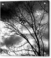 Stormy Beauty Acrylic Print by Candice Trimble