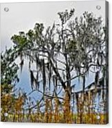 Stormy Marsh Cedar Tree Acrylic Print
