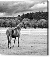 Stormy Pasture Acrylic Print