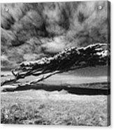 Stormy Promise Acrylic Print