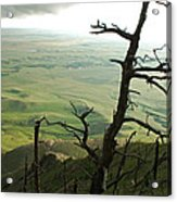 Stormy Tree Acrylic Print