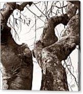 Story Tree Acrylic Print by Jennifer Apffel