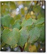 Stranded Hearts Of Autumn Acrylic Print