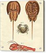 Strange Crabs Acrylic Print