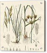 Strange Grasses Acrylic Print