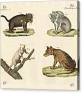 Strange Marsupials Acrylic Print