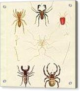 Strange Spiders Acrylic Print