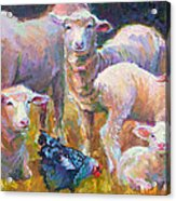 Stranger At The Well - Spring Lambs Sheep And Hen Acrylic Print