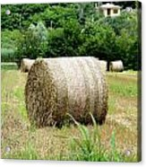 Straw To Collect Acrylic Print