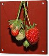 Strawberry Delicious Acrylic Print