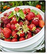 Strawberry Harvest Acrylic Print
